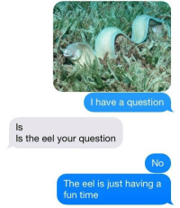 Time, Fun, and Eel: I have a question  Is  Is the eel your question  The eel is just having a  fun time