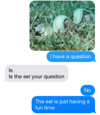 Time, Fun, and Eel: I have a question  ls  Is the eel your question  No  The eel is just having a  fun time