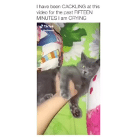 Crying, Tumblr, and Blog: I have been CACKLING at this  video for the past FIFTEEN  MINUTES I am CRYING  d TikTok babyanimalgifs:This is the funniest video ever 😂