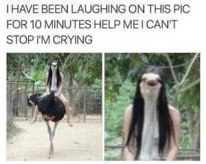 *ostrich noises* by JakeTECEMERALD MORE MEMES: I HAVE BEEN LAUGHING ON THIS PIC  FOR 10 MINUTES HELP MEI CAN'T  STOP I'M CRYING *ostrich noises* by JakeTECEMERALD MORE MEMES