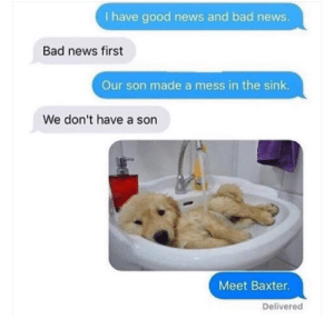 I mean… he's so cute by sportamous MORE MEMES: I have good news and bad news.  Bad news first  Our son made a mess in the sink.  We don't have a son  Meet Baxter.  Delivered I mean… he's so cute by sportamous MORE MEMES