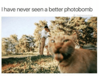 Photobomb, Grumpy Cat, and Never: I have never seen a better photobomb  the blessedone