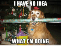 I have no idea what I am doing   BOL   #dog #christmaspaper: I HAVE NO IDEA  WHAT I'M DOING  momegenerator net I have no idea what I am doing   BOL   #dog #christmaspaper