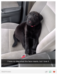 but i love it: I have no idea what this face means, but I love it.  100,874 notes