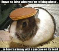 Head, Idea, and Bunny: I have no idea what you're talking about..  .so here's a bunny with a pancake on its head.