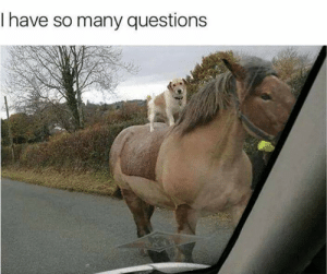 Old, Questions, and Town: I have so many questions Old Town Road