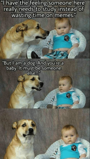 "Memes, Time, and Baby: ""I have the feeling someone here  really needs to study instead of  wasting time on memes""  ""But I am a dog. And you're a  baby. It must be someone  else.."