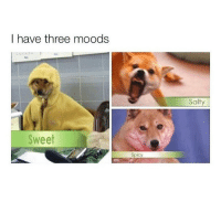 Memes, 🤖, and Salt: I have three moods  Sweet  Salt 2017 return of the shibe dog memes?