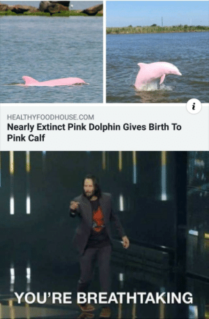 Dolphin, Pink, and World: i  HEALTHYFOODHOUSE.COM  Nearly Extinct Pink Dolphin Gives Birth To  Pink Calf  YOU'RE BREATHTAKING The world is breathtaking