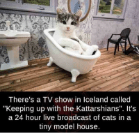 "Dump of cat related things: I here's a IV show in lceland called  ""Keeping up with the Kattarshians"". It's  a 24 hour live broadcast of cats in a  tiny model house. Dump of cat related things"