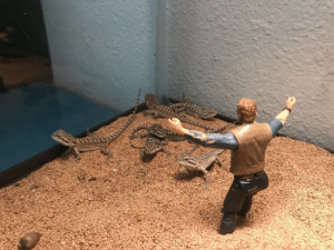Dragons, For, and Trainer: I hired a trainer for my newly-hatched bearded dragons.