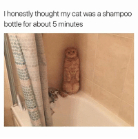 What cat 🤔😂 | More 👉 @miinute: I honestly thought my cat was a shampoo  bottle for about 5 minutes What cat 🤔😂 | More 👉 @miinute