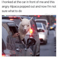 Dank, Alpaca, and 🤖: I honked at the car in front of me and this  angry Alpaca popped out and now I'm not  sure what to do *Never honks at another car again*
