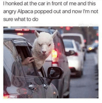 Memes, Angry, and Alpaca: I honked at the car in front of me and this  angry Alpaca popped out and now I'm not  sure what to do