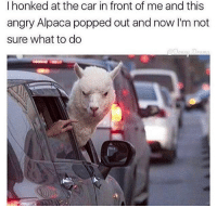 imagine: I honked at the car in front of me and this  angry Alpaca popped out and now I'm not  sure what to do imagine