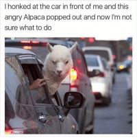 I'm not honking no more 😑: I honked at the car in front of me and this  angry Alpaca popped out and now I'm not  sure what to do I'm not honking no more 😑