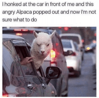 Dank, Angry, and Faith: I honked at the car in front of me and this  angry Alpaca popped out and now I'm not  sure what to do Accept your faith.