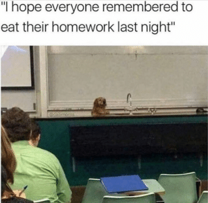 """Animals, Funny, and Memes: """"I hope everyone remembered to  eat their homework last night""""  @dabmoms 42 Funny Dog Memes That'll Make Your Day! - Lovely Animals World"""