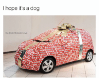 Dank Memes, Hopeing, and Ogs: I hope it's a dog  IG:ashitheadsteve  OG O  50 000 @friendofbae has the best dog memes