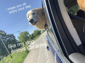 https://t.co/4SvswbEPuZ: i hope you all  enjoy your day  like my dog  enjoys car rides https://t.co/4SvswbEPuZ