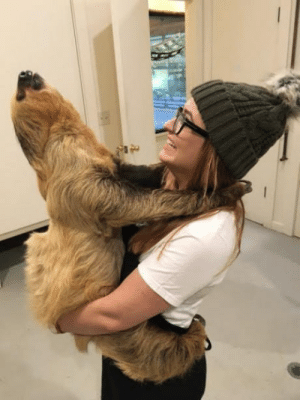 I hugged a sloth yesterday!: I hugged a sloth yesterday!