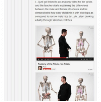 Ironic, Teacher, and Video: I...I just got linked to an anatomy video for the pelvis  and the teacher starts explaining the differences  between the male and female structures and he  demonstrated how easy childbirth is with wide hips as  compared to narrow male hips by. .uh. .slam dunking  a baby through skeleton crotches  Anatomy of the Pelvis for Artists  e 60A  Prok