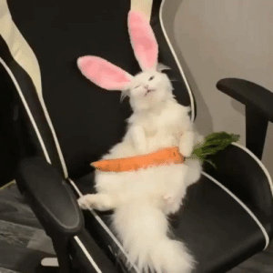 Rabbit and I Is: I is Rabbit