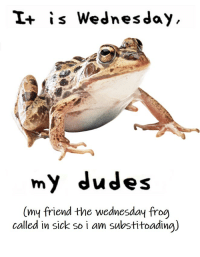 Wednesday: I+ is Wednesday  my dudes  (my friend the wednesday frog  called in sick so i am sulbstitoadina)