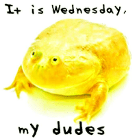 Wednesday: I+ is Wednesday  my dudes