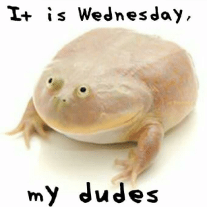 Gif, Memes, and Tumblr: I+ is Wednesday  my dudes sticksdrawsss: 30-minute-memes:   30-minute-memes: It is Wednesday, my dudes  Are you just gunna scroll by without giving this Wednesday Frog a reblog?   Your only supposed to reblog on Wednesdays
