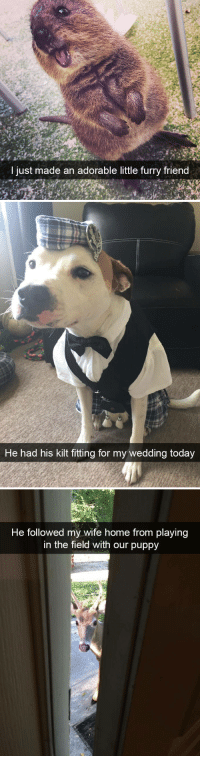 animalsnaps:Animal snaps: I jus  t m  ade an adorable little furry friend   He had his kilt fitting for my wedding today   He followed my wife home from playing  in the field with our puppy animalsnaps:Animal snaps