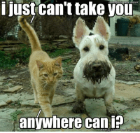I'm going to hear The Odd Couple's theme song in my head all night ( I guess you will too now hehe). Via Canine Anonymous: i just can't take you  anywhere can  www.facebook at addicts I'm going to hear The Odd Couple's theme song in my head all night ( I guess you will too now hehe). Via Canine Anonymous