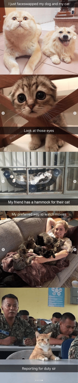 justcatposts: Cat snaps (#4@youngestoldcatlady) : I just faceswapped my dog and my cat   Look at those eyes   My friend has a hammock for their cat   My preferred way to watch movies   Reporting for duty sir justcatposts: Cat snaps (#4@youngestoldcatlady)