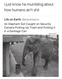 Life, Shit, and Trash: I just know he mumbling about  how humans ain't shit  Life on Earth @planetepics  An Elephant Got Caught on Security  Camera Picking Up Trash and Putting it  in a Garbage Can  @memelif3  gifak net Can I hire him to clean my apartment? @memelif3_