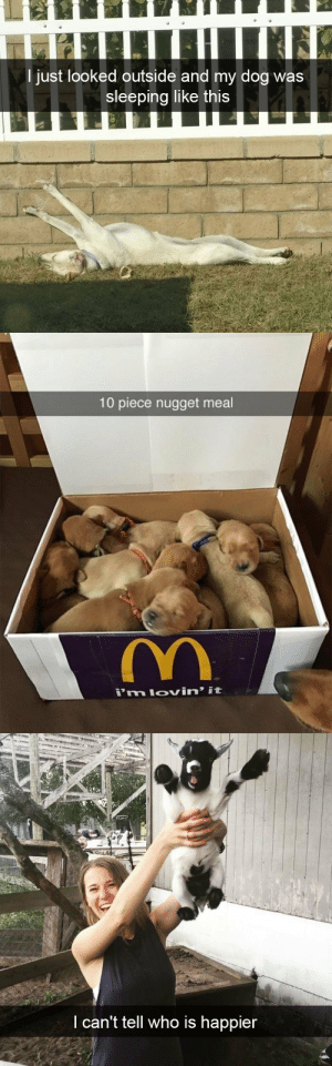 animalsnaps:Animal snaps: I just looked outside and my dog was  sleeping like this   10 piece nugget meal   th  I can't tell who is happier animalsnaps:Animal snaps