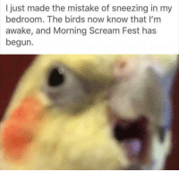 Scream, Birds, and The Birds: I just made the mistake of sneezing in my  bedroom. The birds now know that I'm  awake, and Morning Scream Fest has  begun.