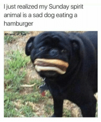 Memes, Animal, and Spirit: I just realized my Sunday spirit  animal is a sad dog eating a  hamburger  @Friend of Bael That is my exact face every Sunday 😩 (@friendofbae)