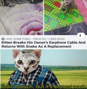 Snake, Cable, and Kitten: i  JUST SOMETHING CREATIVE 2 MIN READ  Kitten Breaks His Owner's Earphone Cable And  Returns With Snake As A Replacement  It ainit much, but it's honestwork .