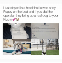 Memes, Hotel, and Puppy: I just stayed in a hotel that leaves a toy  Puppy on the bed and if you dial the  operator they bring up a real dog to your  Room6