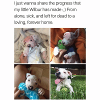 Being Alone, Funny, and Ted: I just wanna share the progress that  my little Wilbur has made :) From  alone, sick, and left for dead to a  loving, forever home. This made my day ❤️(@hilarious.ted) Credits: twitter-_kennedycox