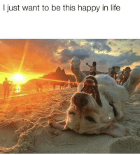 Life, Memes, and Happy: I just want to be this happy in life https://t.co/w0ylnJxC92