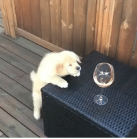 Dogs, Memes, and Wine: I just want to drink wine & pet dogs! With @gatsbythegolden_ 🐶