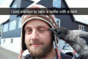 19 Funny Snapchat Memes Of Birds - Funny Animals - Daily LOL Pics: I just wanted to take a selfie with a bird 19 Funny Snapchat Memes Of Birds - Funny Animals - Daily LOL Pics