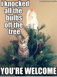 i knocked  all the  bulbs  off the  tree  YOU'RE WELCOME For more awesome holiday, retro, and funny pictures go to... www.snowflakescottage.com