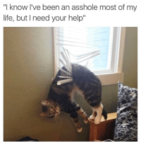 "Life, Memes, and Help: ""I know l've been an asshole most of my  life, but I need your help"" <p>Living with a cat via /r/memes <a href=""http://ift.tt/2CggsYM"">http://ift.tt/2CggsYM</a></p>"