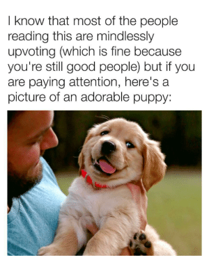 I mindlessly U P v0te too so it's ok if you do, you are not alone: I know that most of the people  reading this are mindlessly  upvoting (which is fine because  you're still good people) but if you  are paying attention, here's a  picture of an adorable puppy: I mindlessly U P v0te too so it's ok if you do, you are not alone