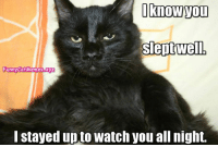 From Funny Cat Memes: I know Tou  Slept well  FunnyCatMemees.xyz  I stayed up to watch you all night. From Funny Cat Memes