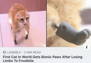 this made me smile via /r/wholesomememes http://bit.ly/2WNtDe7: i  LADBIBLE 3 MIN READ  First Cat In World Gets Bionic Paws After Losing  Limbs To Frostbite this made me smile via /r/wholesomememes http://bit.ly/2WNtDe7