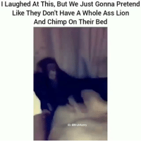 Ass, Friends, and Memes: I Laughed At This, But We Just Gonna Pretend  Like They Don't Have A Whole Ass Lion  And Chimp On Their Bed  IG: Bruhifunny 😂😂😂 ✖️ Tag Friends ✖️ Follow (me) For More ✖️ Check Out My Recents