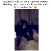 Ass, Lion, and Dank Memes: i laughed at this but we just gonna pretend  like they don't have a whole ass lion and  chimp on their bed k Slapped tf outta him 😩😂